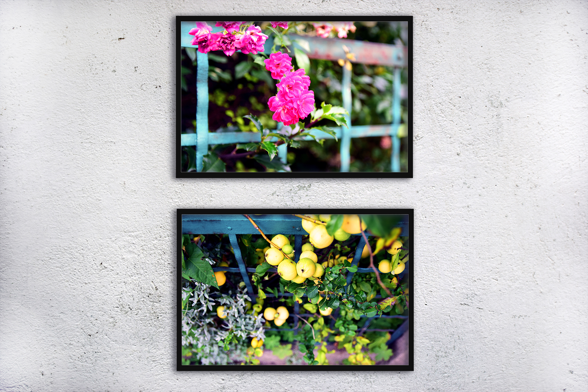 Nature photo, floral photo, flower photo, summer example image 3