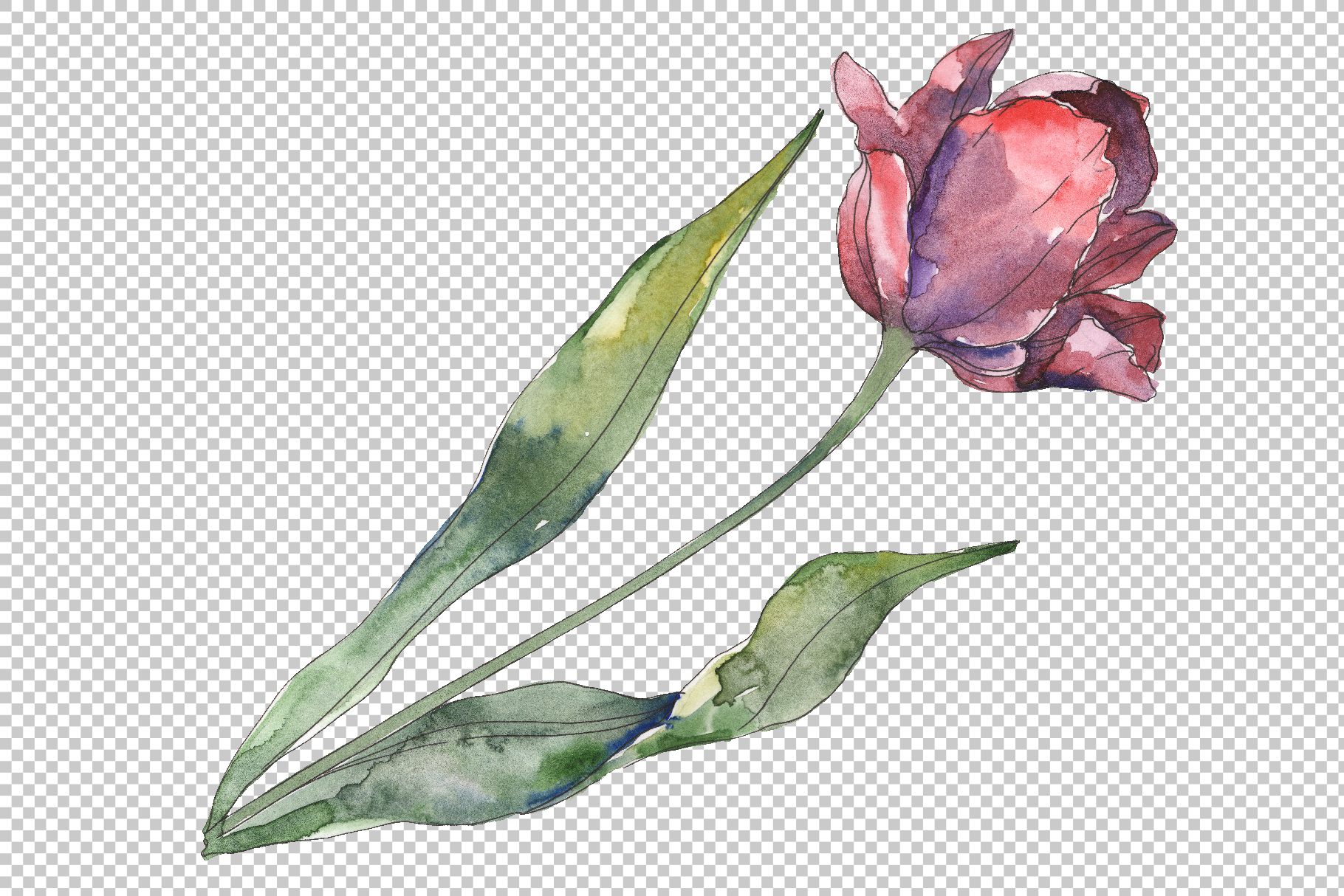 Tulips Watercolor png example image 5