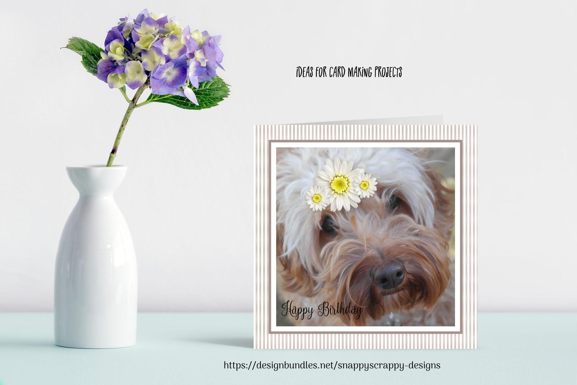 Animal Portrait Photographs example image 6