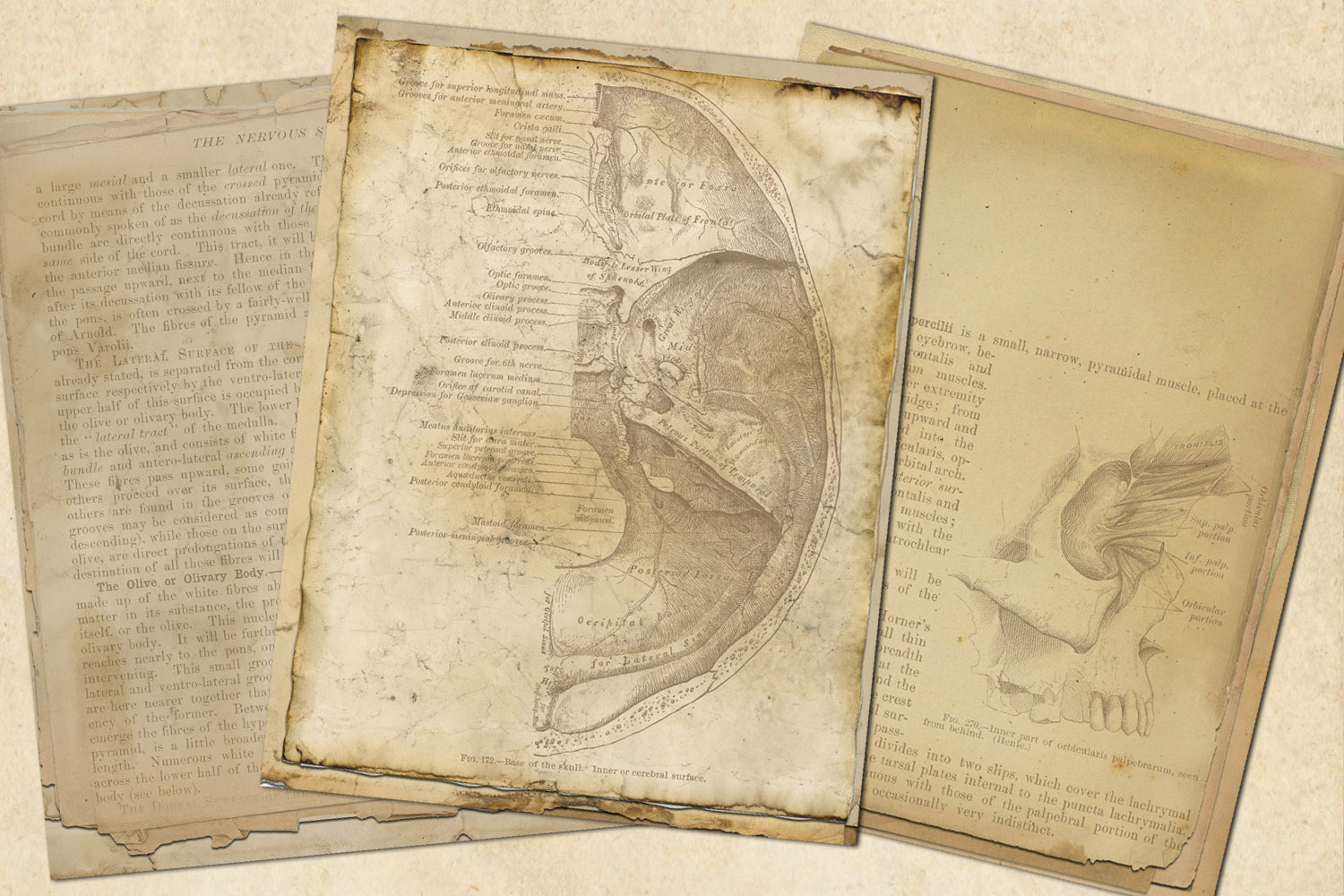 Antique Anatomy Notebook Paper example image 3
