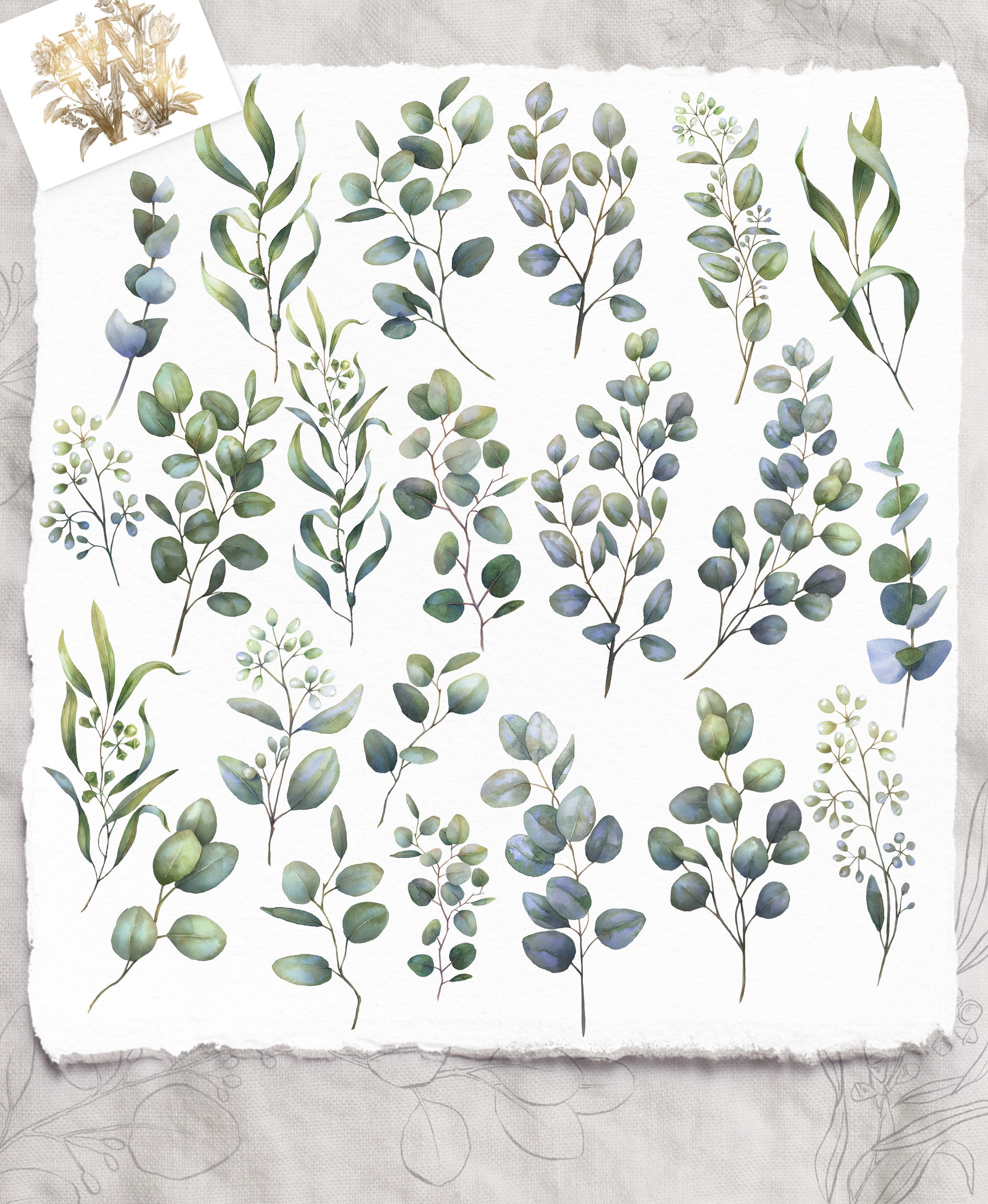 Watercolor Eucalyptus greenery collection clip art example image 5