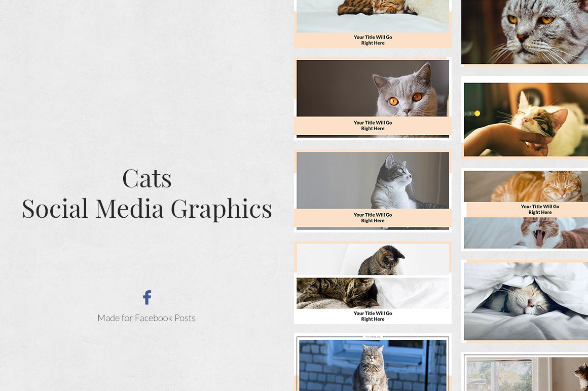 Cats Facebook Posts example image 1
