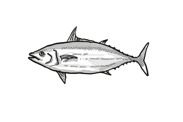 Skipjack Tuna Australian Fish Cartoon Retro Drawing example image 1