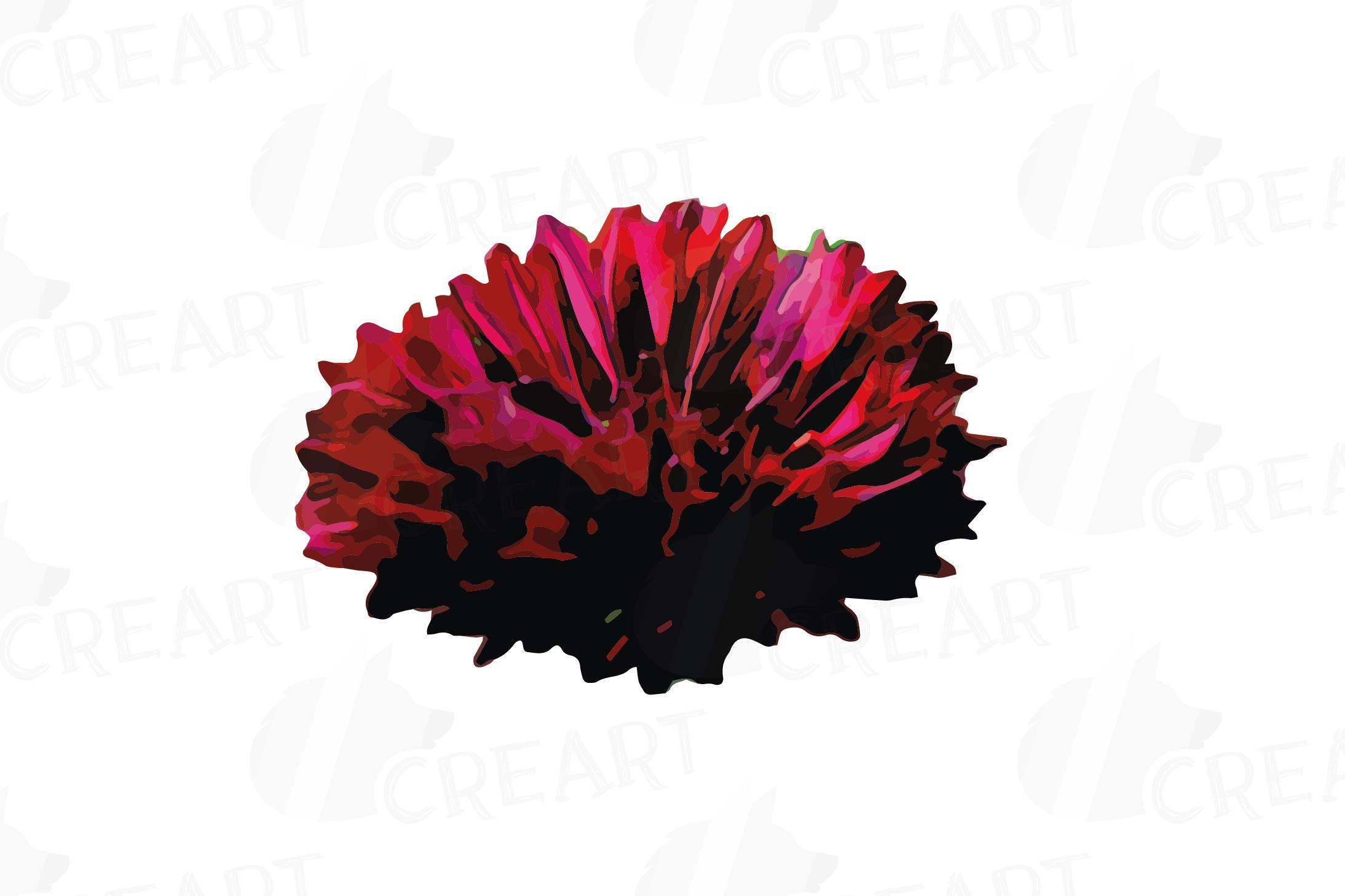 Cornflower watercolor clip art pack, bachelor's button example image 19