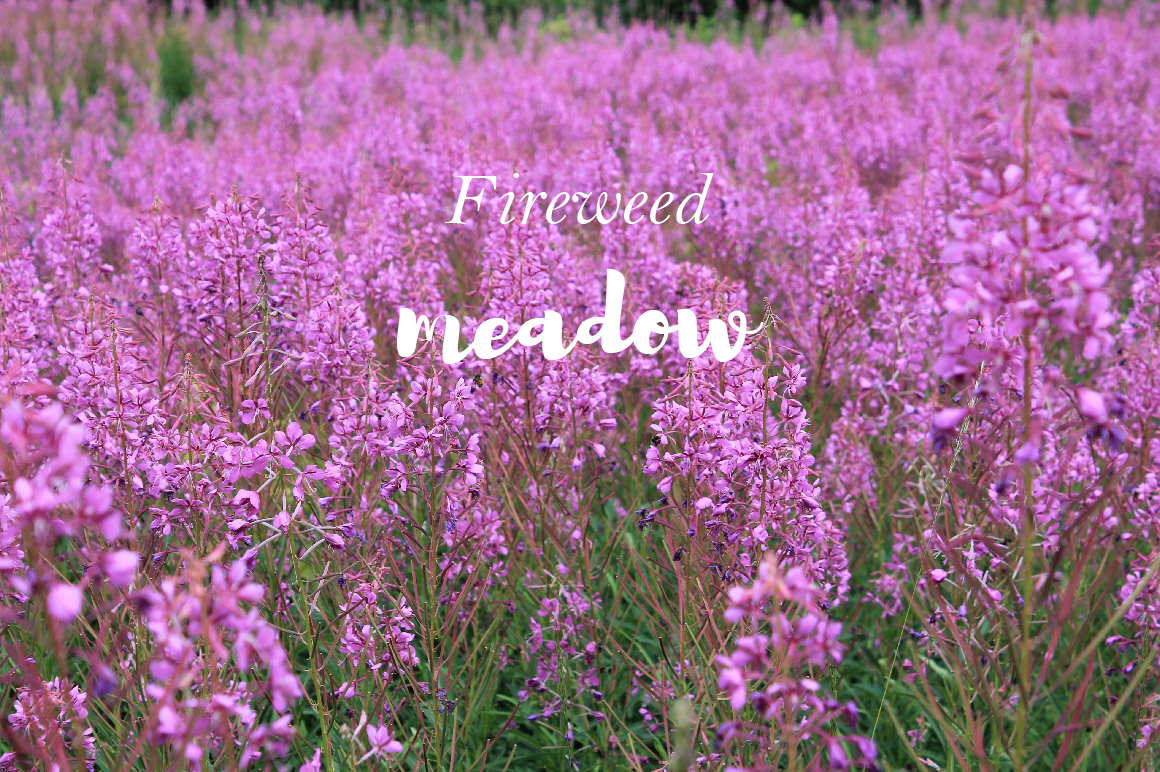 Fireweed meadow set example image 15