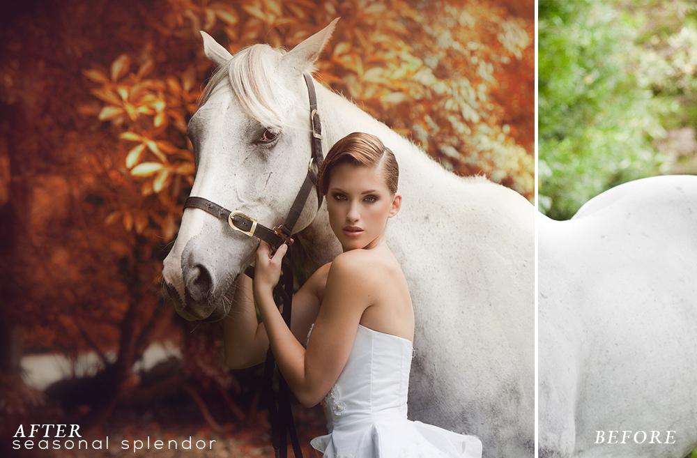 Seasonal Splendor Action Collection example image 5