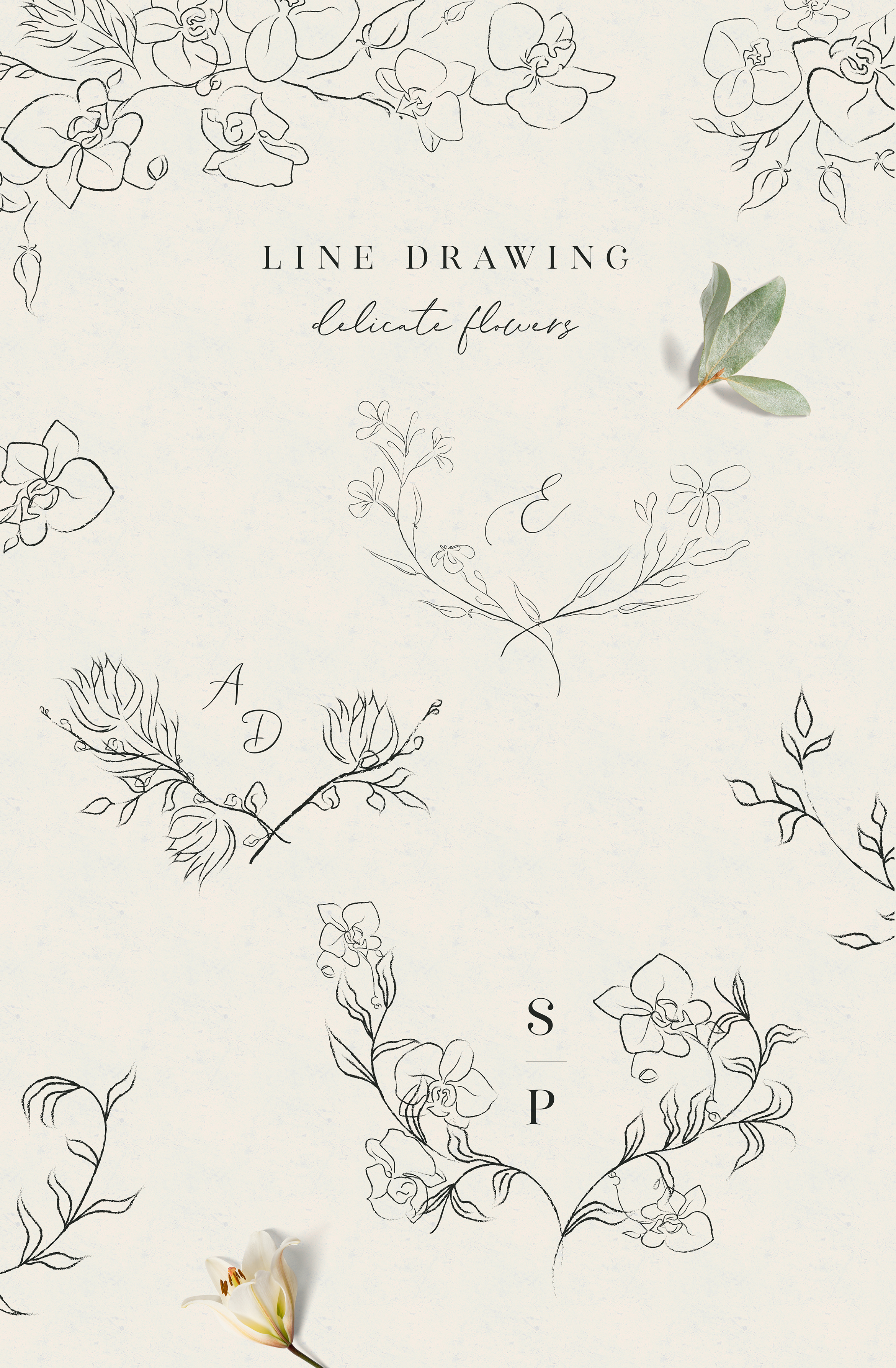 Line clipart hand drawn fine art graphic orchid flower example image 2