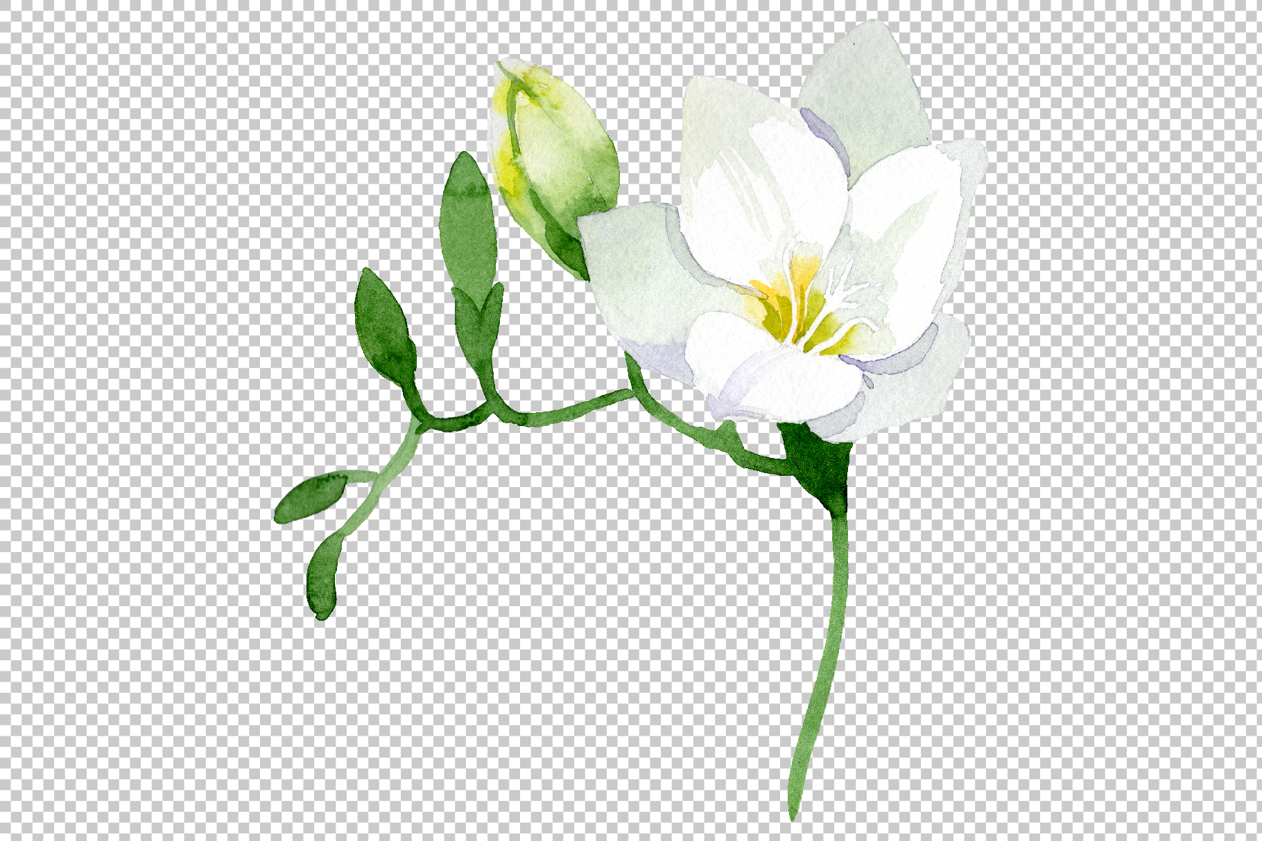 White Freesia Watercolor png example image 4