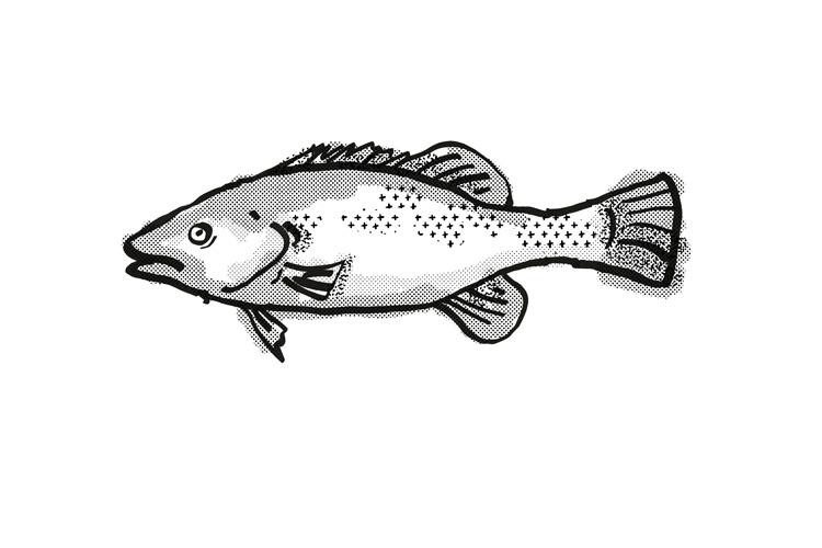 Trout Cod Australian Fish Cartoon Retro Drawing example image 1