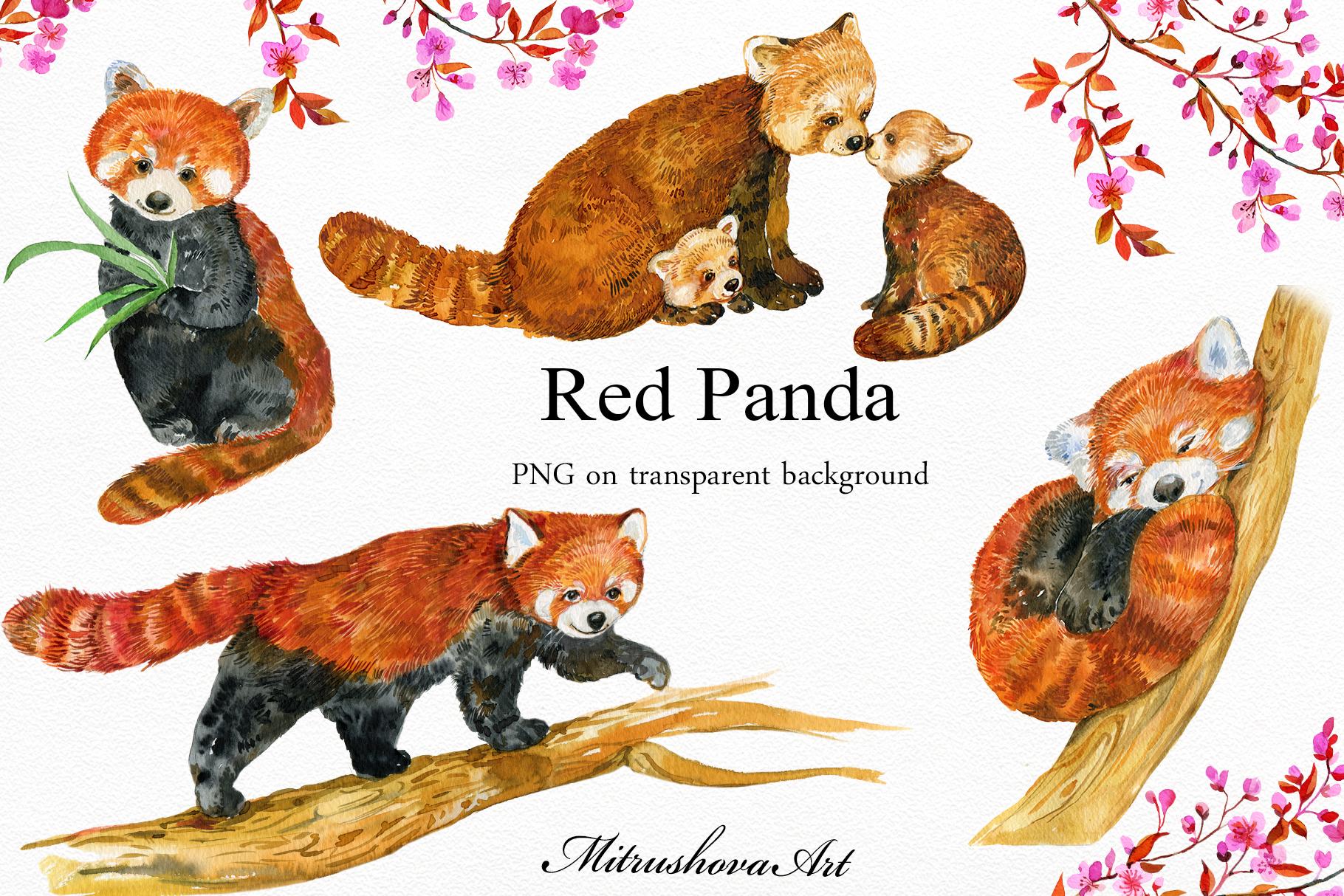 Red Panda ,watercolor illustrations example image 2