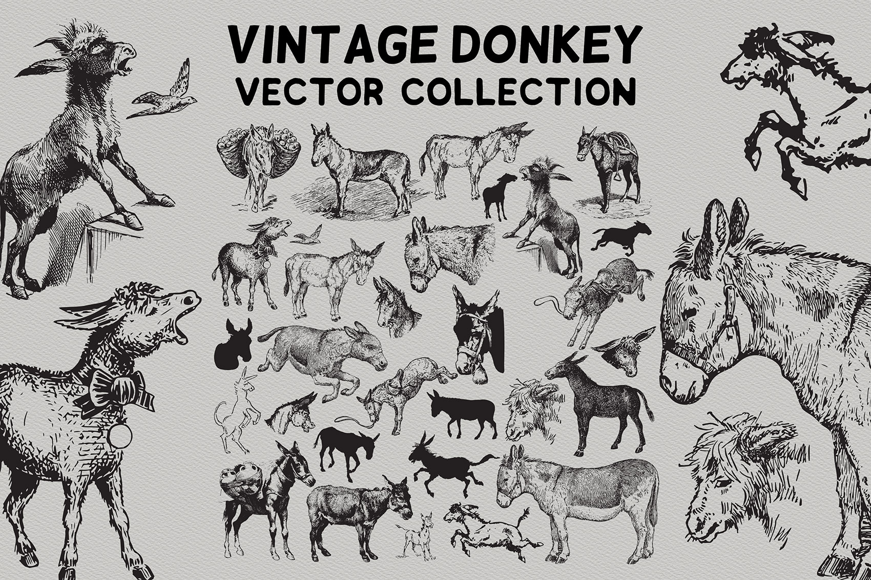 Vintage Donkeys Vector Collection example image 1