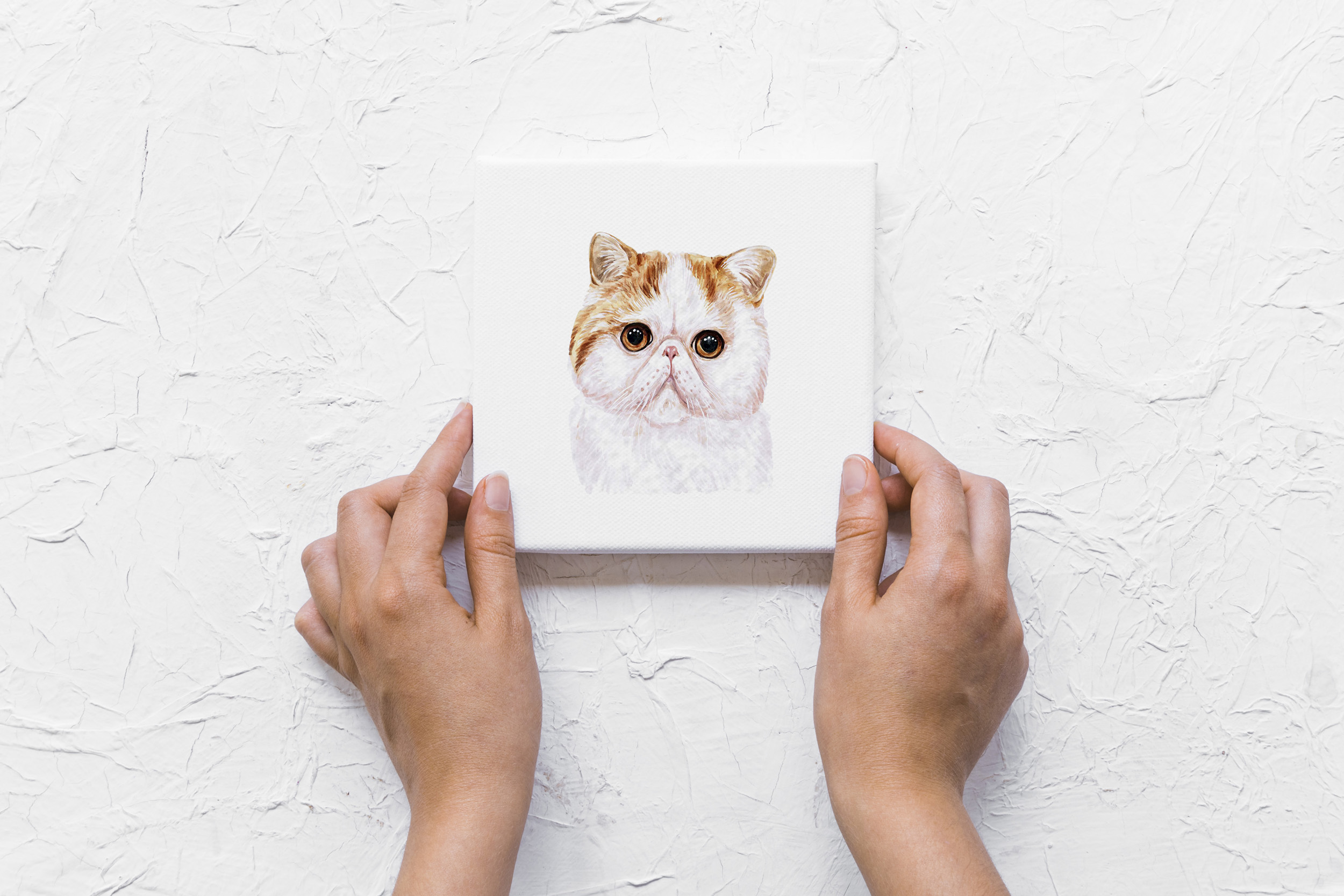 Watercolor 18 cat breeds illustrations. Cute cat. Meow. example image 9
