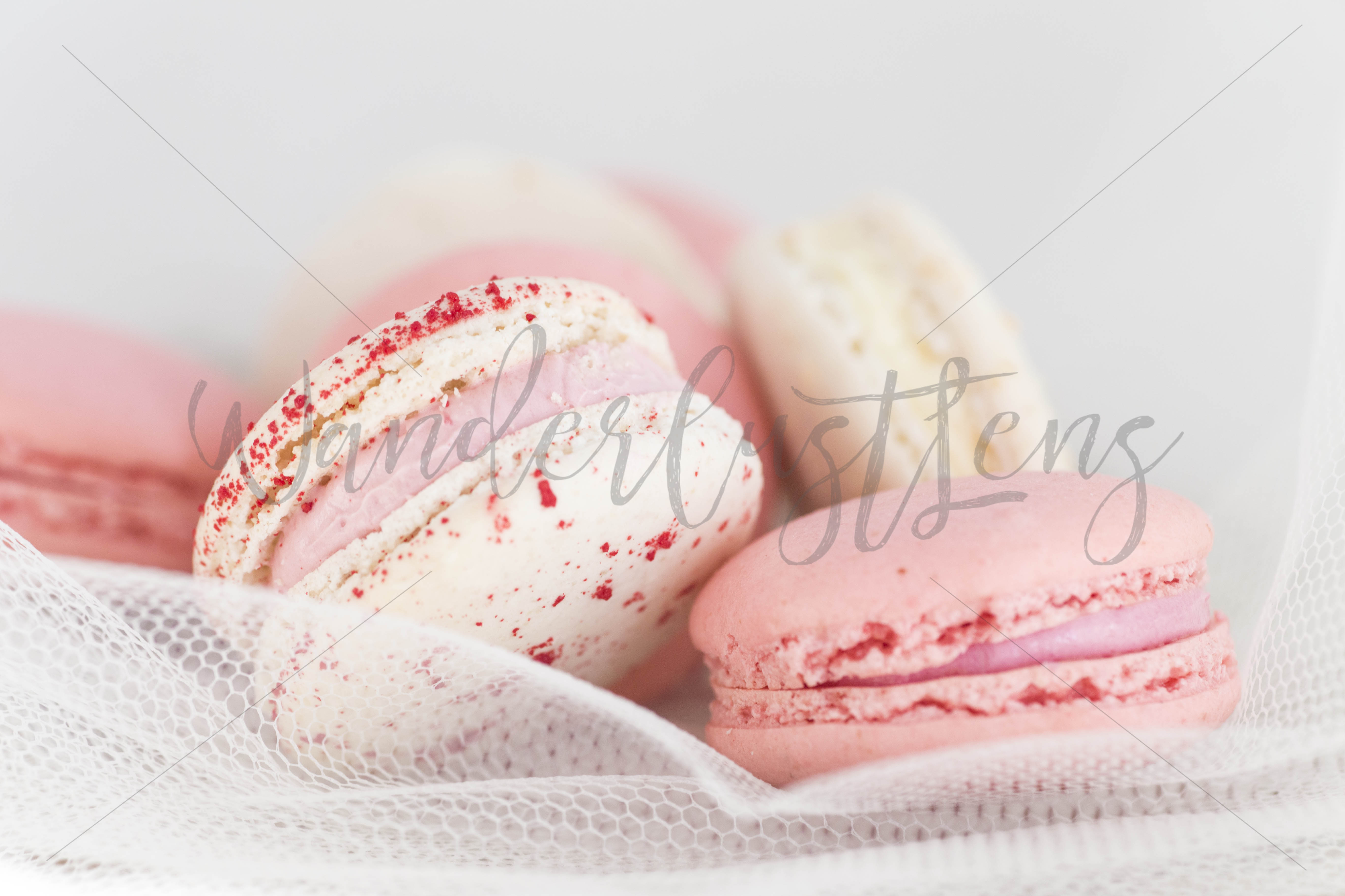 Pink and White Macaroon and Blush Roses Styed Stock bundle example image 3