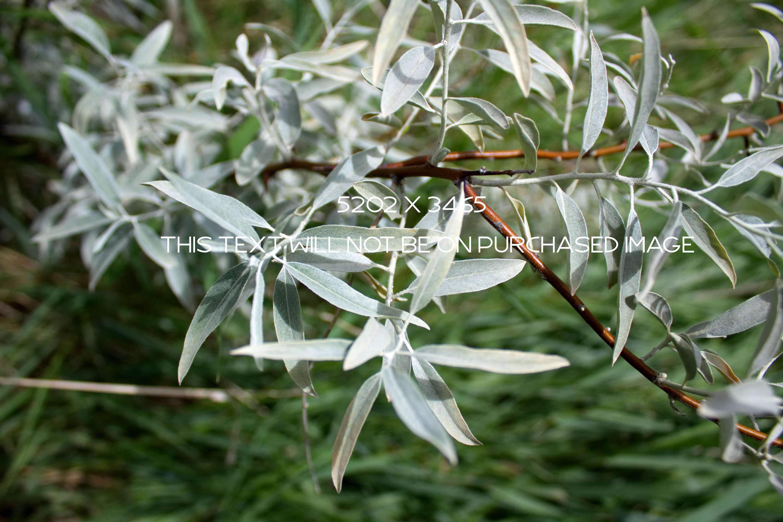 Botanical Photo Bundle, Large Nature Photos example image 7