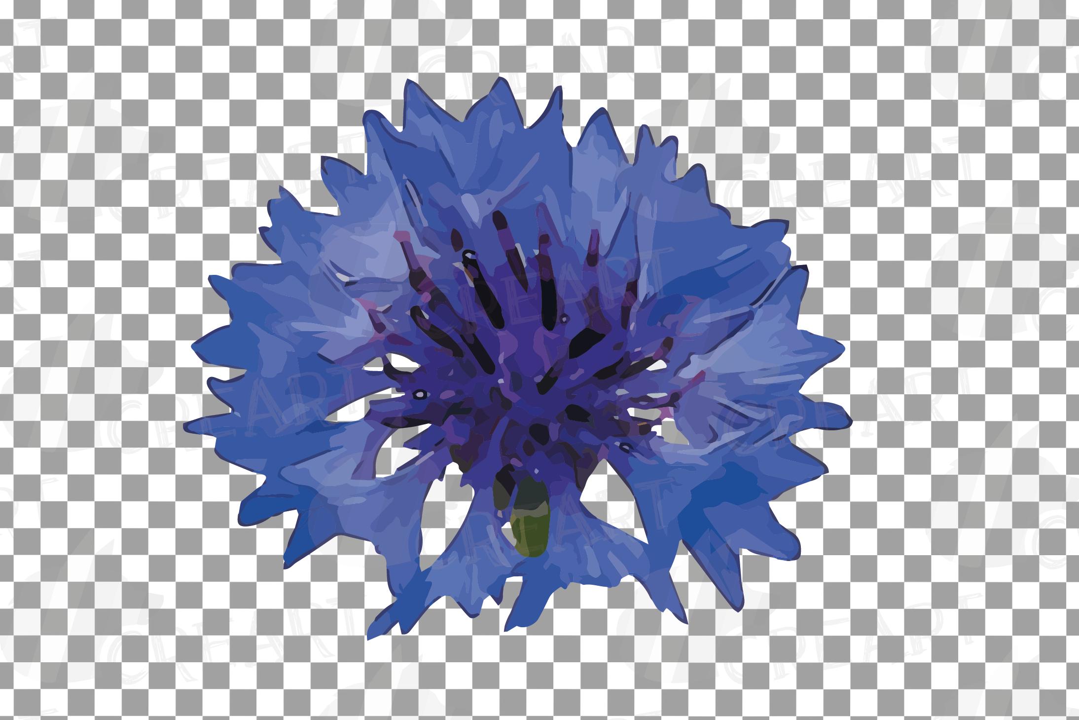 Cornflower watercolor clip art pack, bachelor's button example image 7