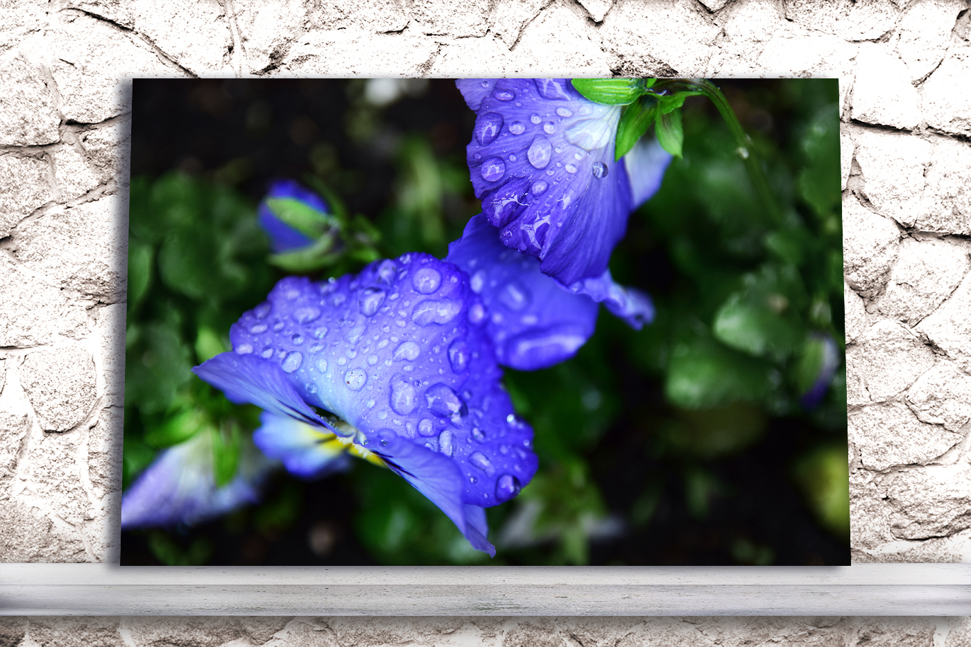 Nature photo, floral photo, spring photo, pansies photo example image 4