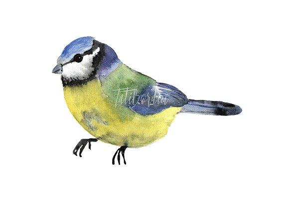 Watercolor Birds Clip Art example image 8