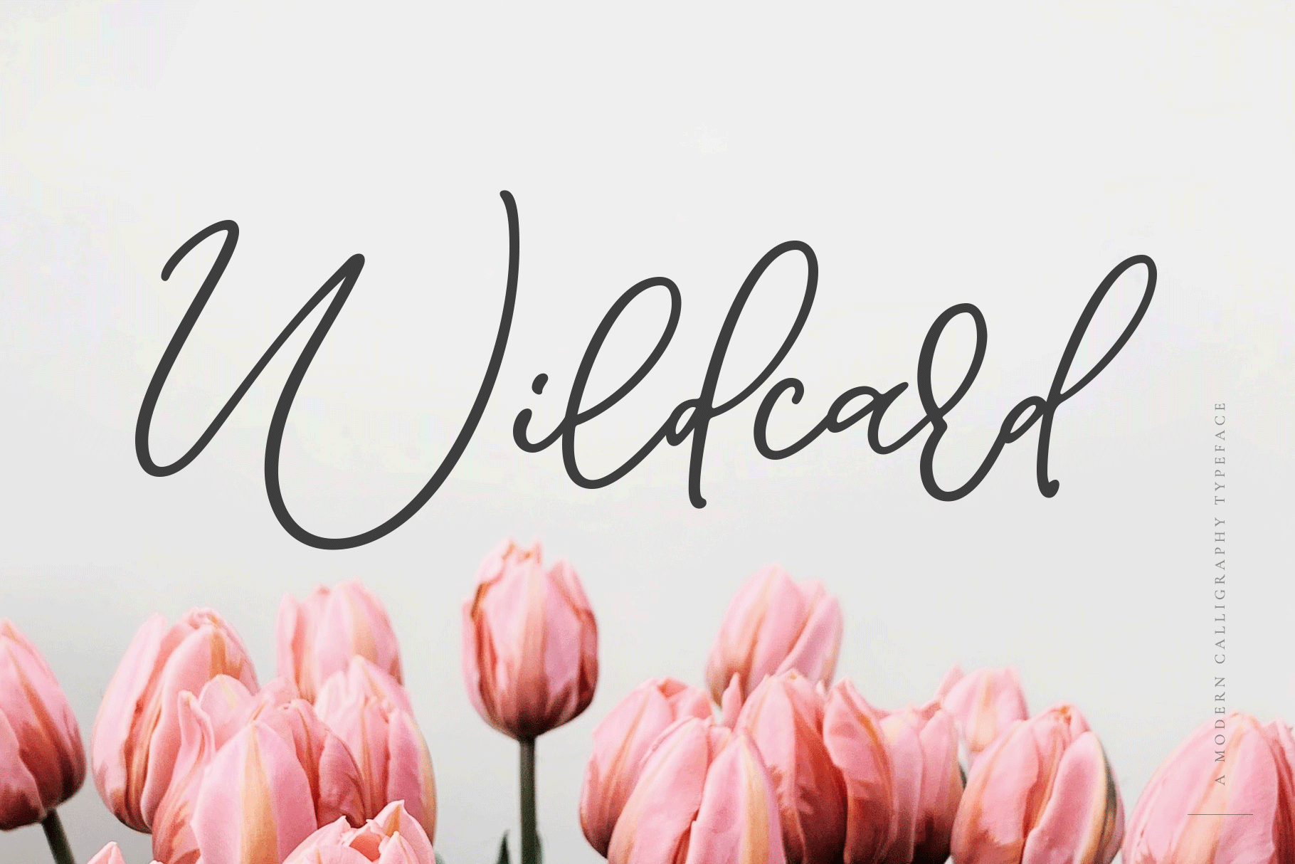 Wildcard | A Modern Calligraphy Script example image 1