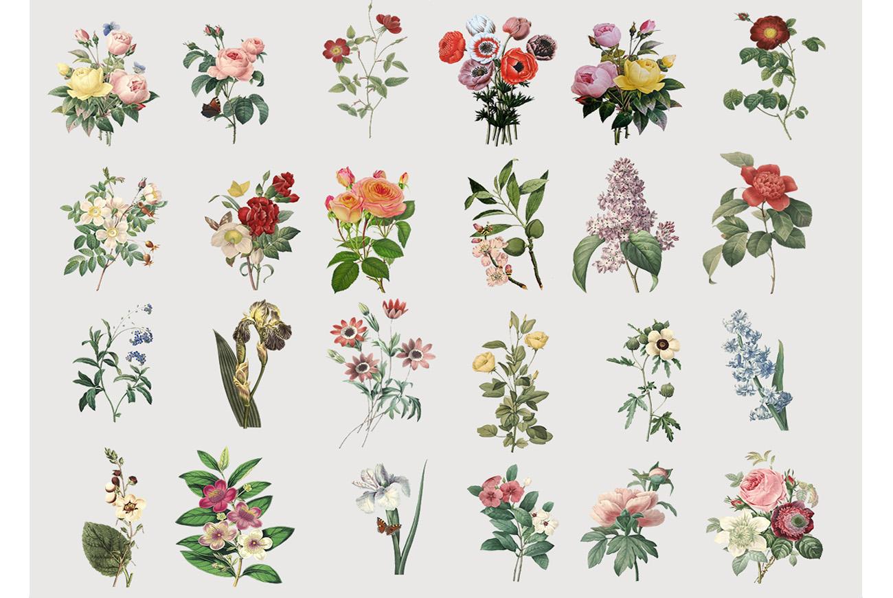 Botanicum - V.2|Elements Botanic example image 6