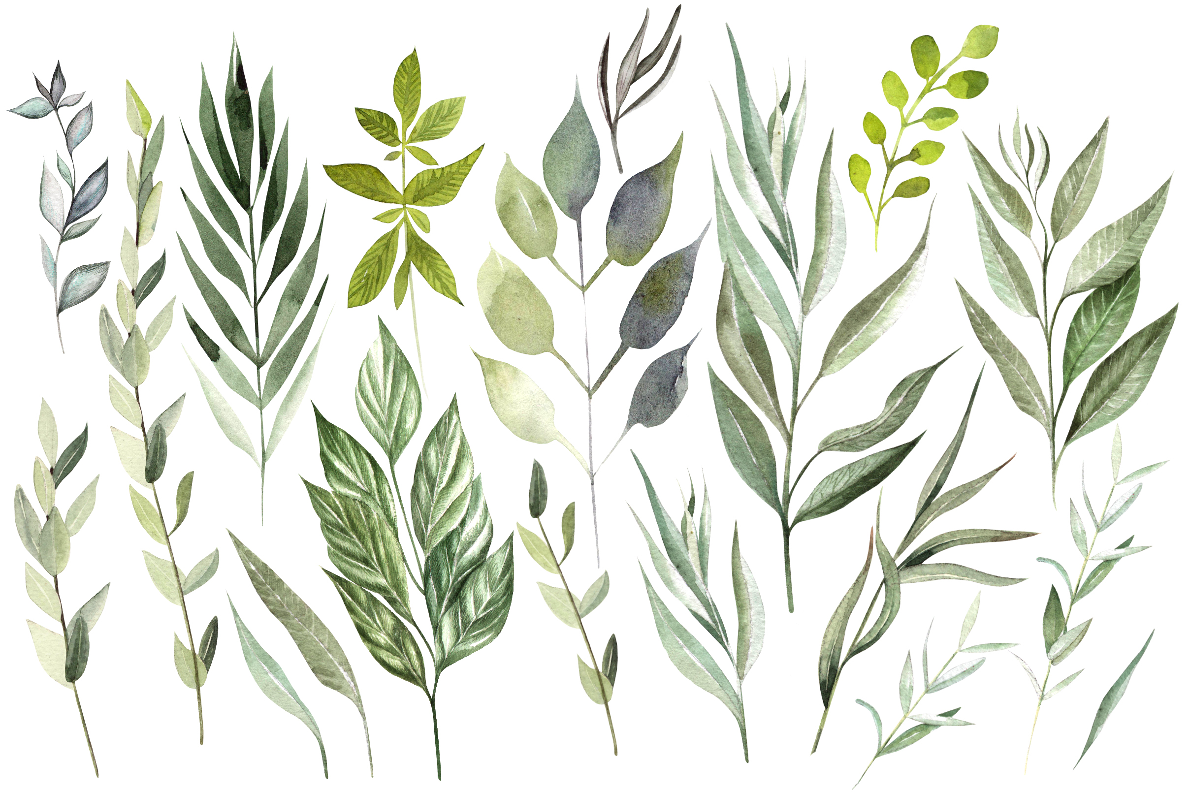Eucalyptus & LEAVES watercolor example image 2