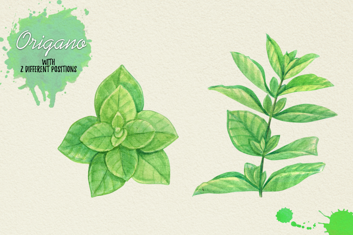 North American Herbs example image 8