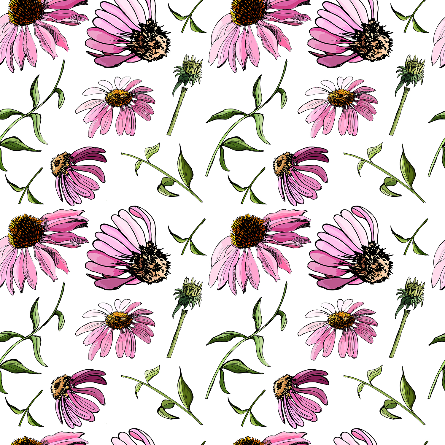 Set with sketches of echinacea flowers.  example image 4