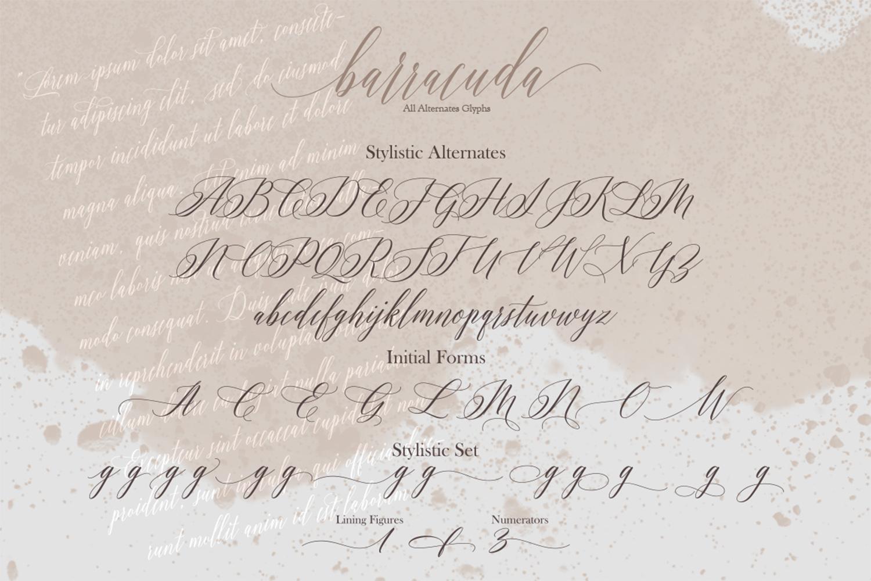 Barracuda Script example image 11