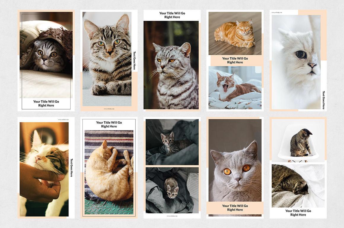 Cats Instagram Stories example image 7