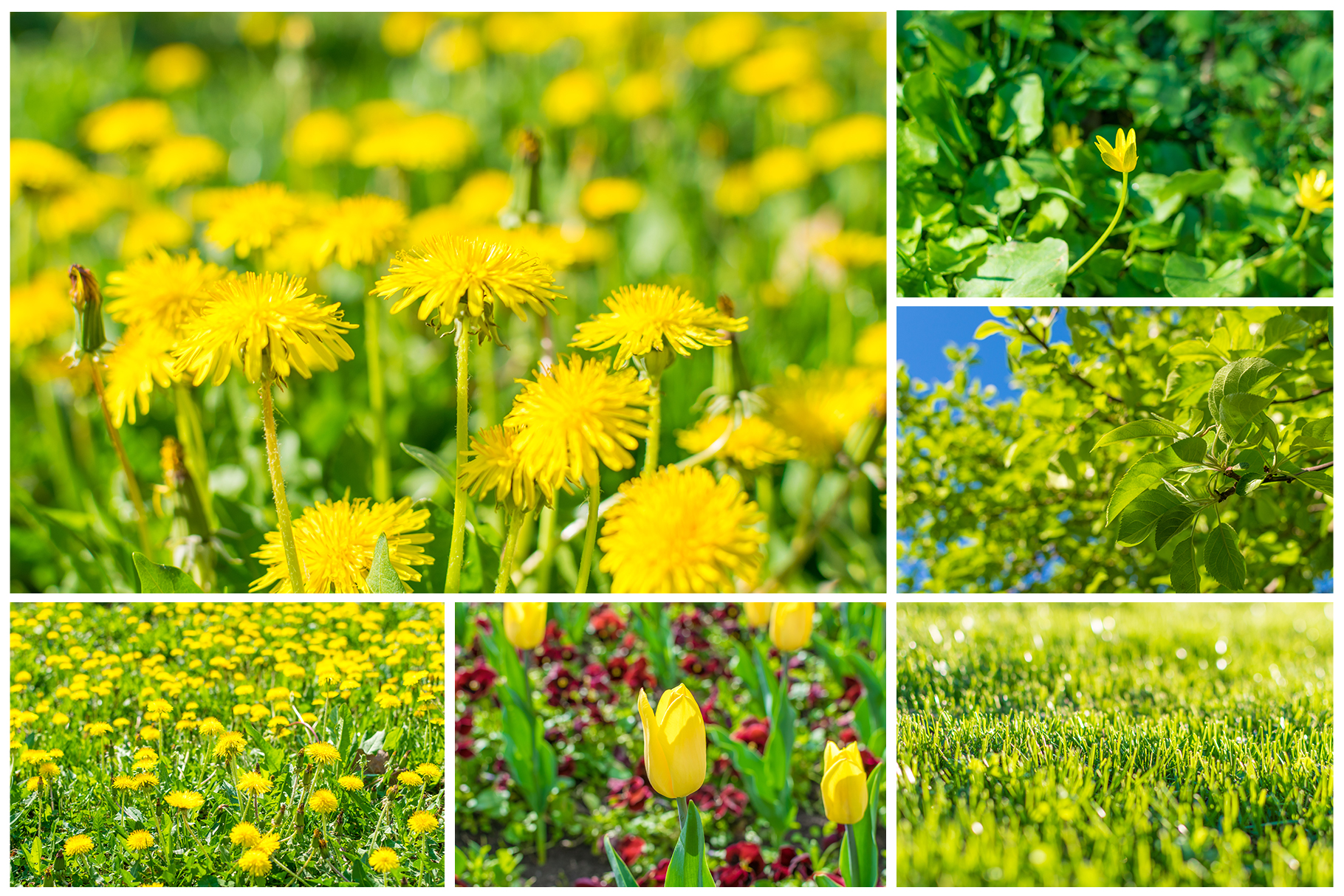 Spring Flowers and Paintings Bundle example image 18