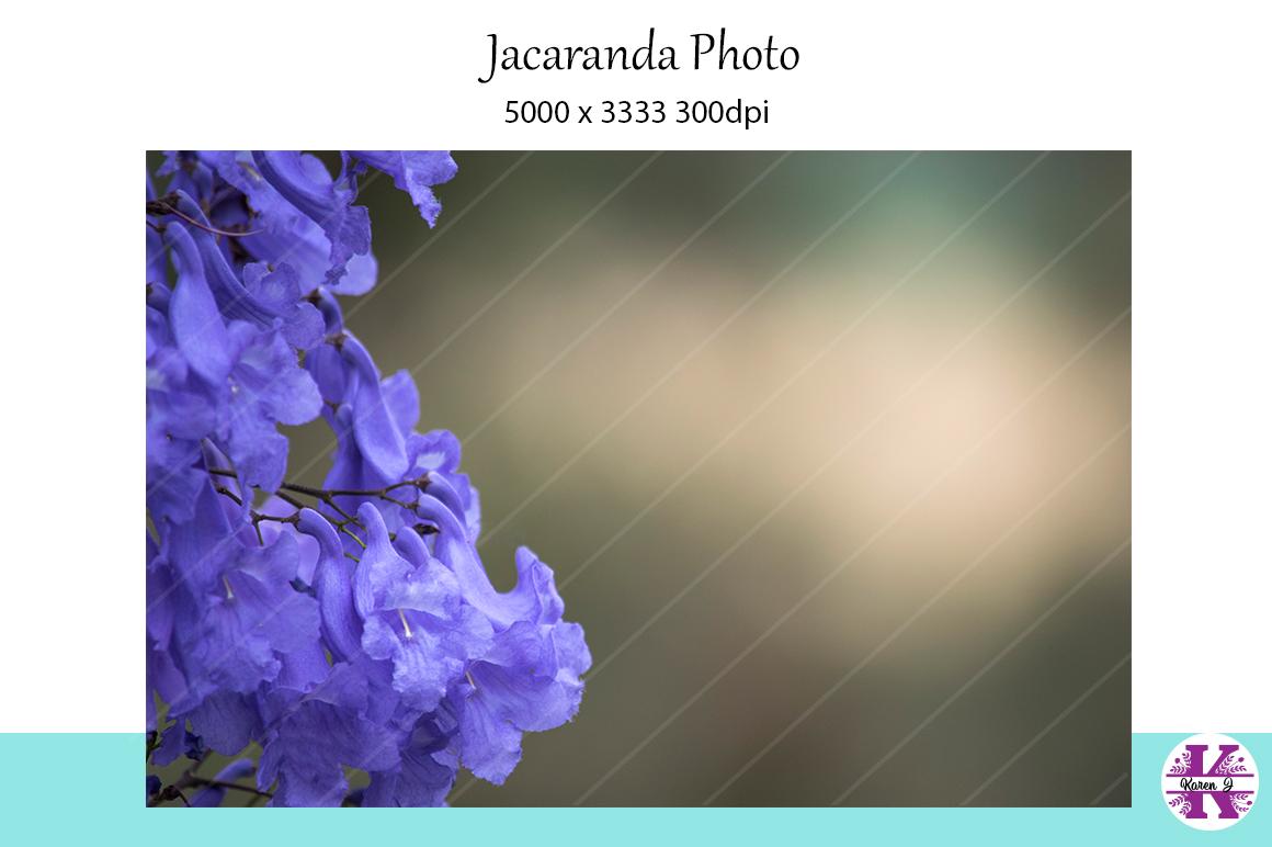 Jacaranda Photo example image 1