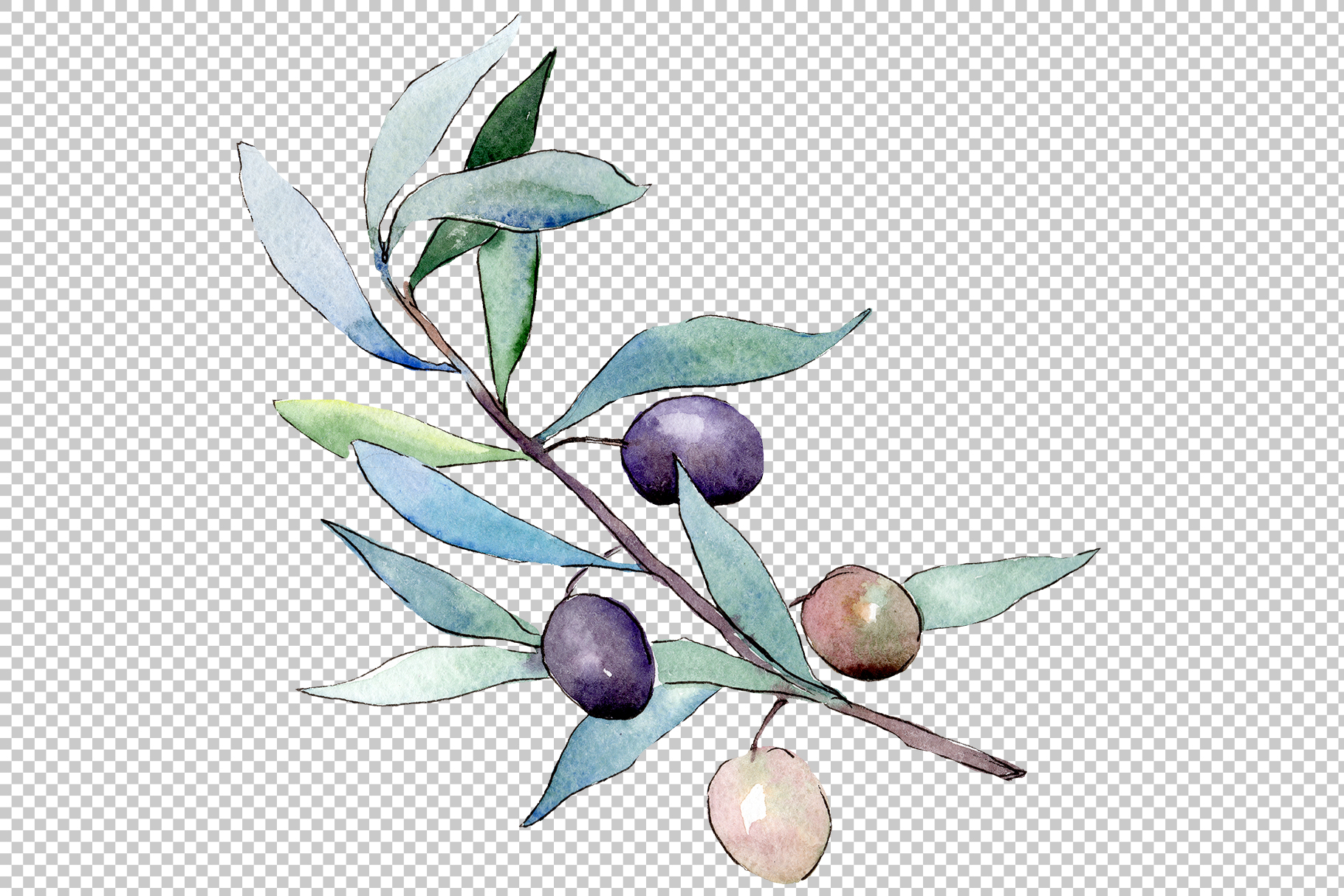 Watercolor olives PNG set example image 3