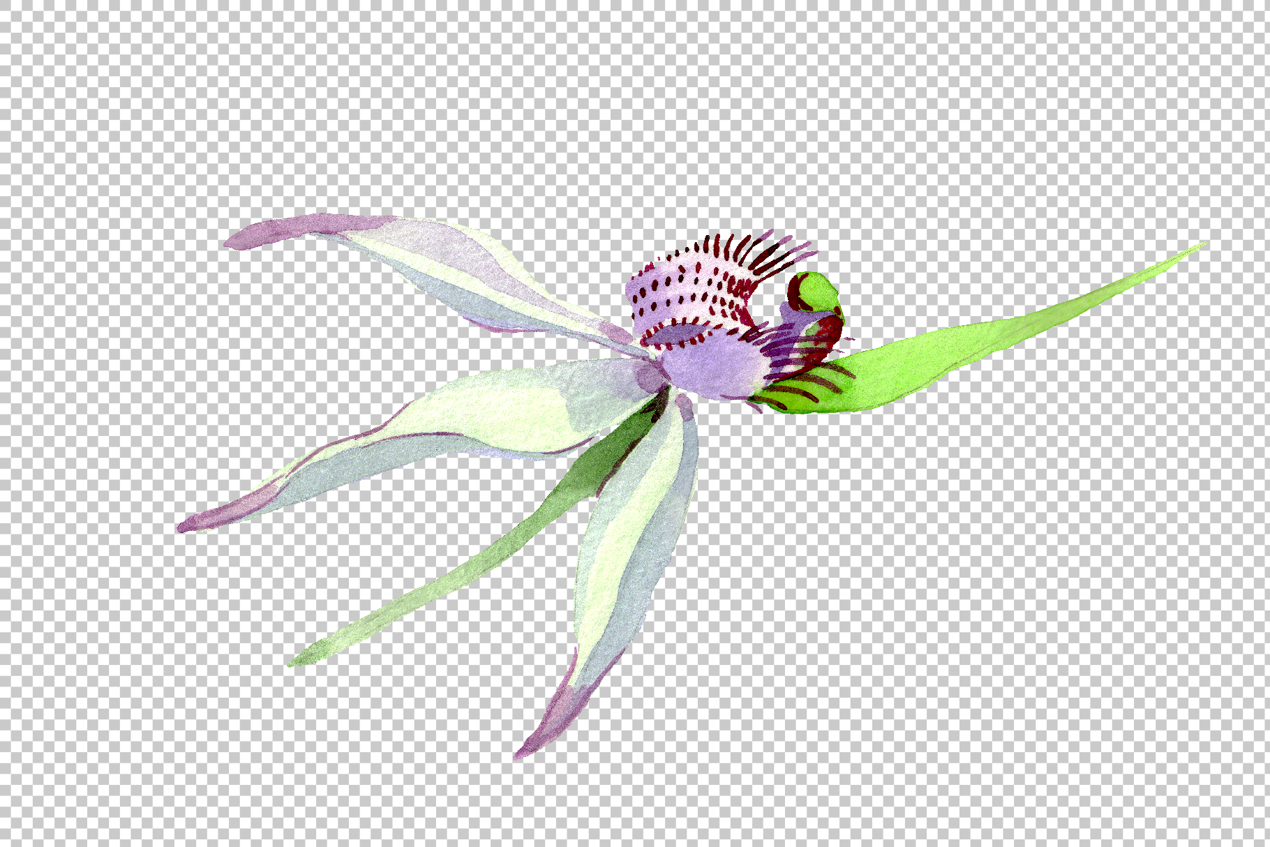 Wild orchid Watercolor png example image 5