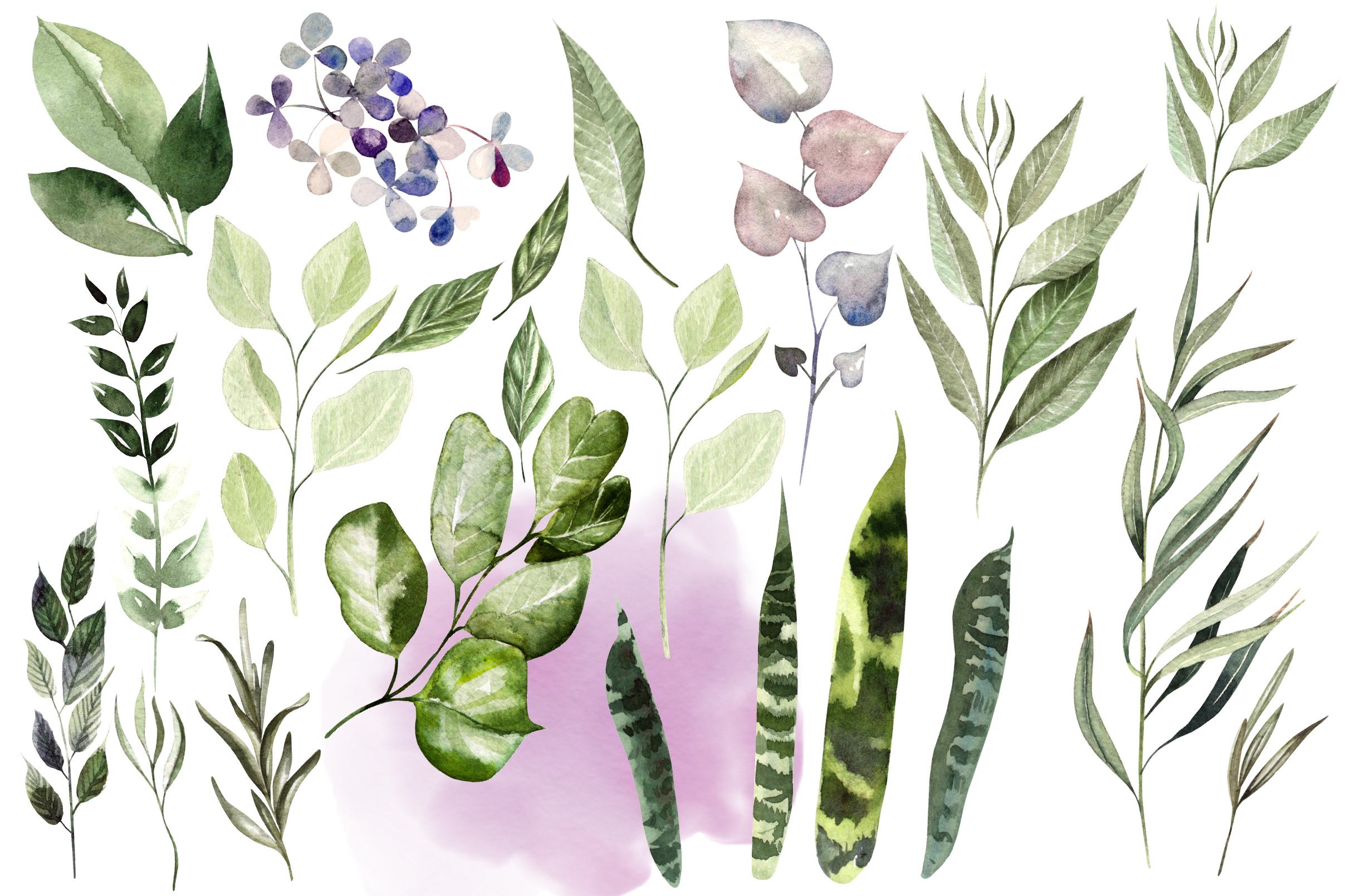 Eucalyptus & LEAVES watercolor example image 9