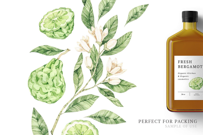 Organic LAB. Watercolor botanical illustrations example image 9