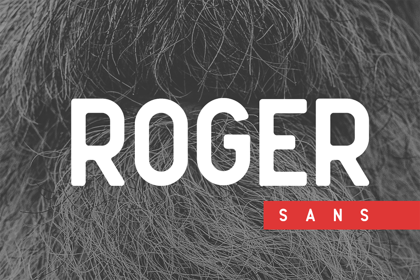 Roger Sans example image 1