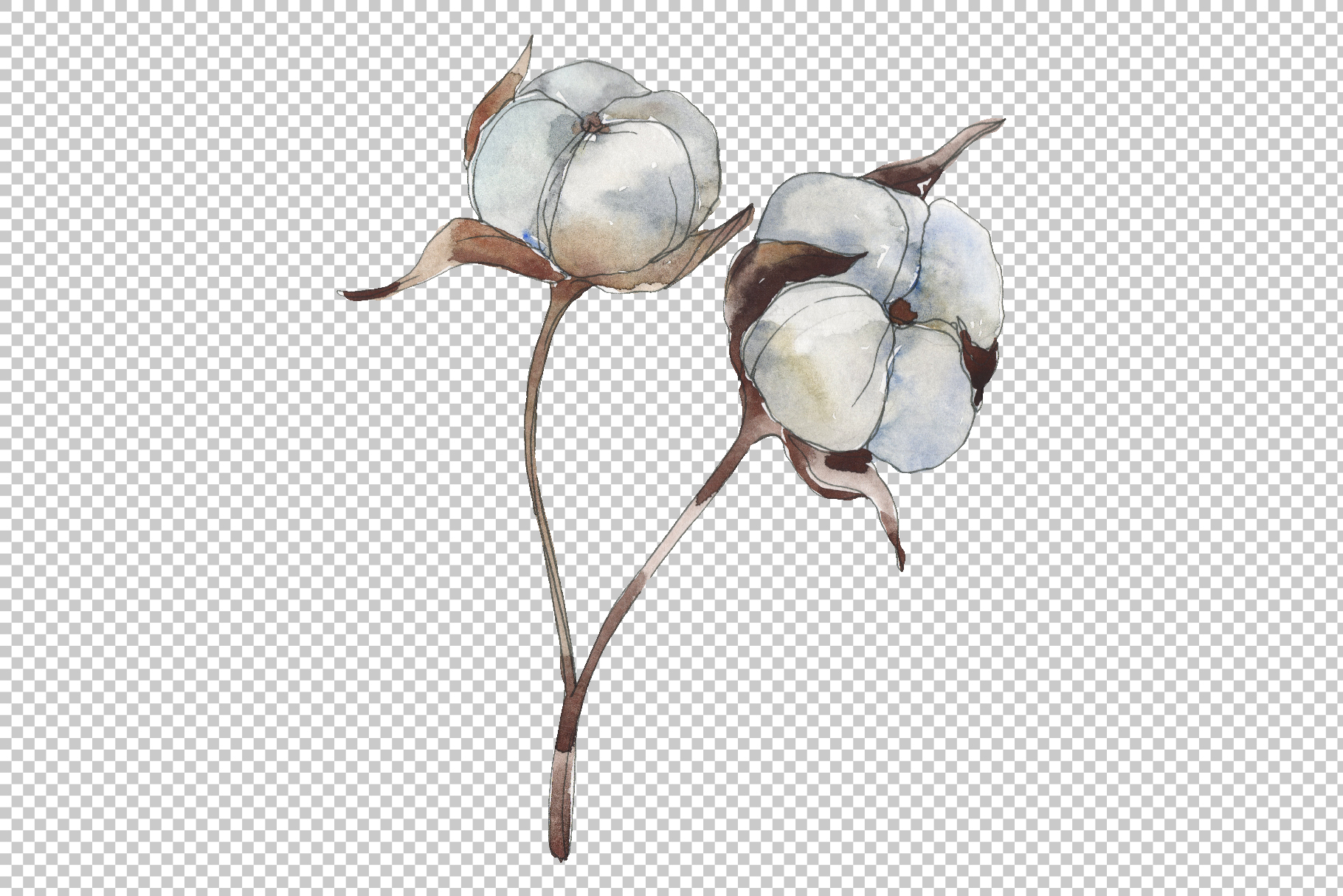 Cotton Watercolor png example image 5