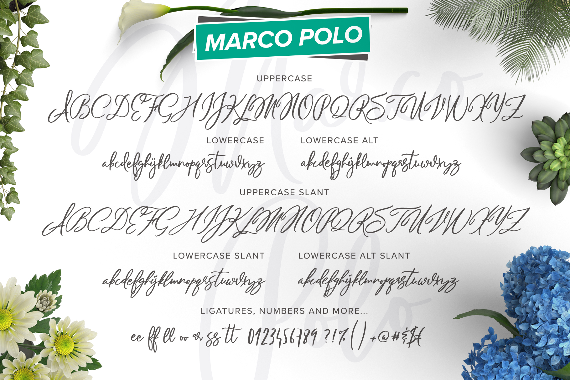 Marco Polo Script example image 2