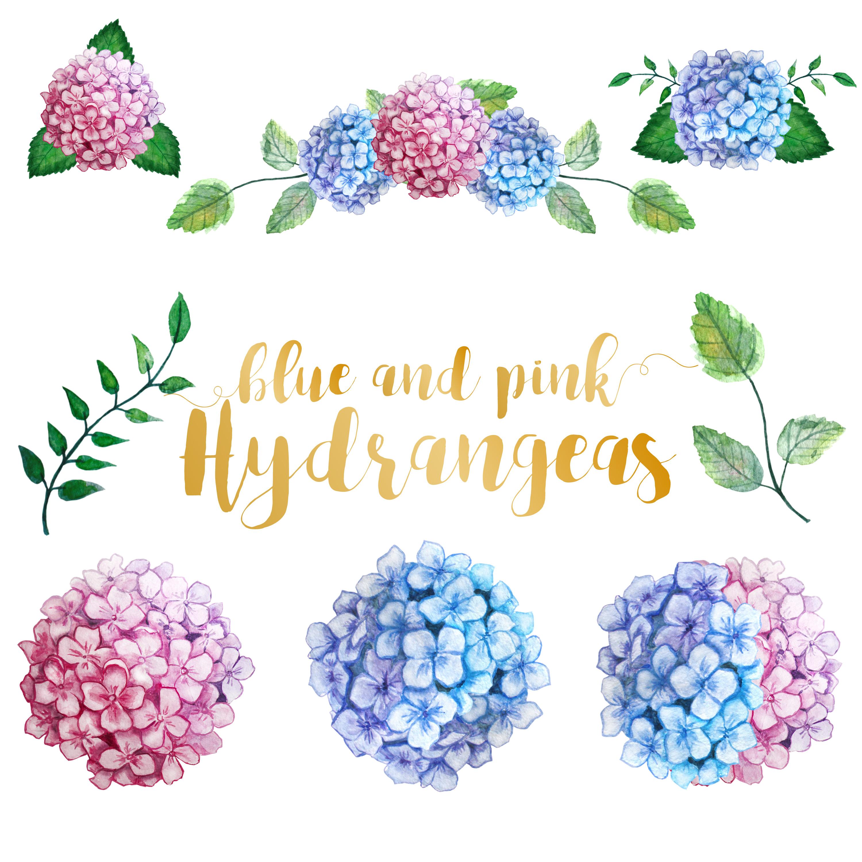 Watercolor Hydrangea Clipart example image 2