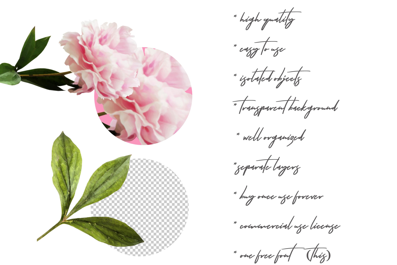 Watercolor Peonies Flowers Clip Art example image 6
