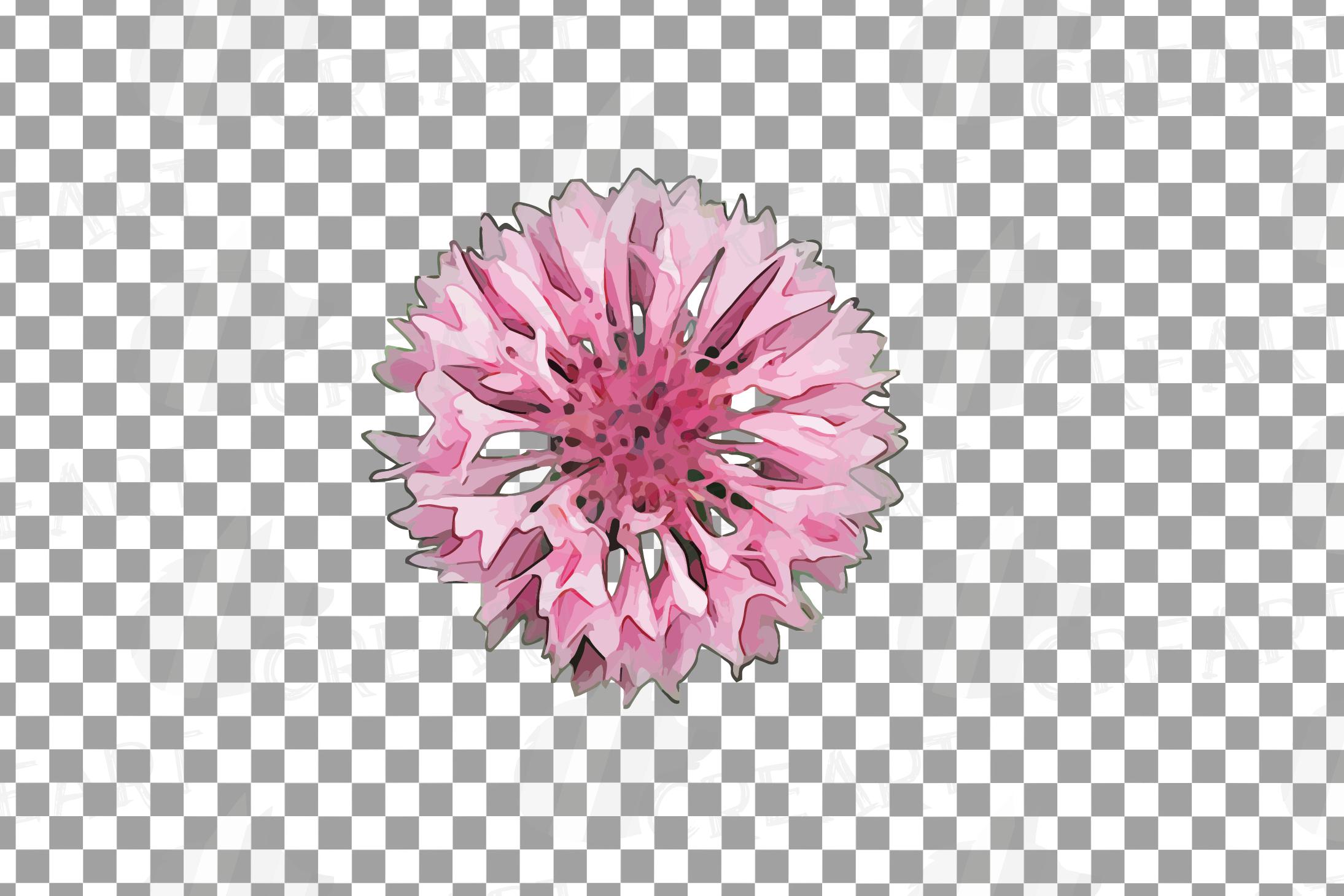 Cornflower watercolor clip art pack, bachelor's button example image 16
