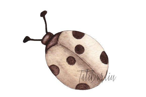 Watercolor Ladybugs Clip Art example image 3