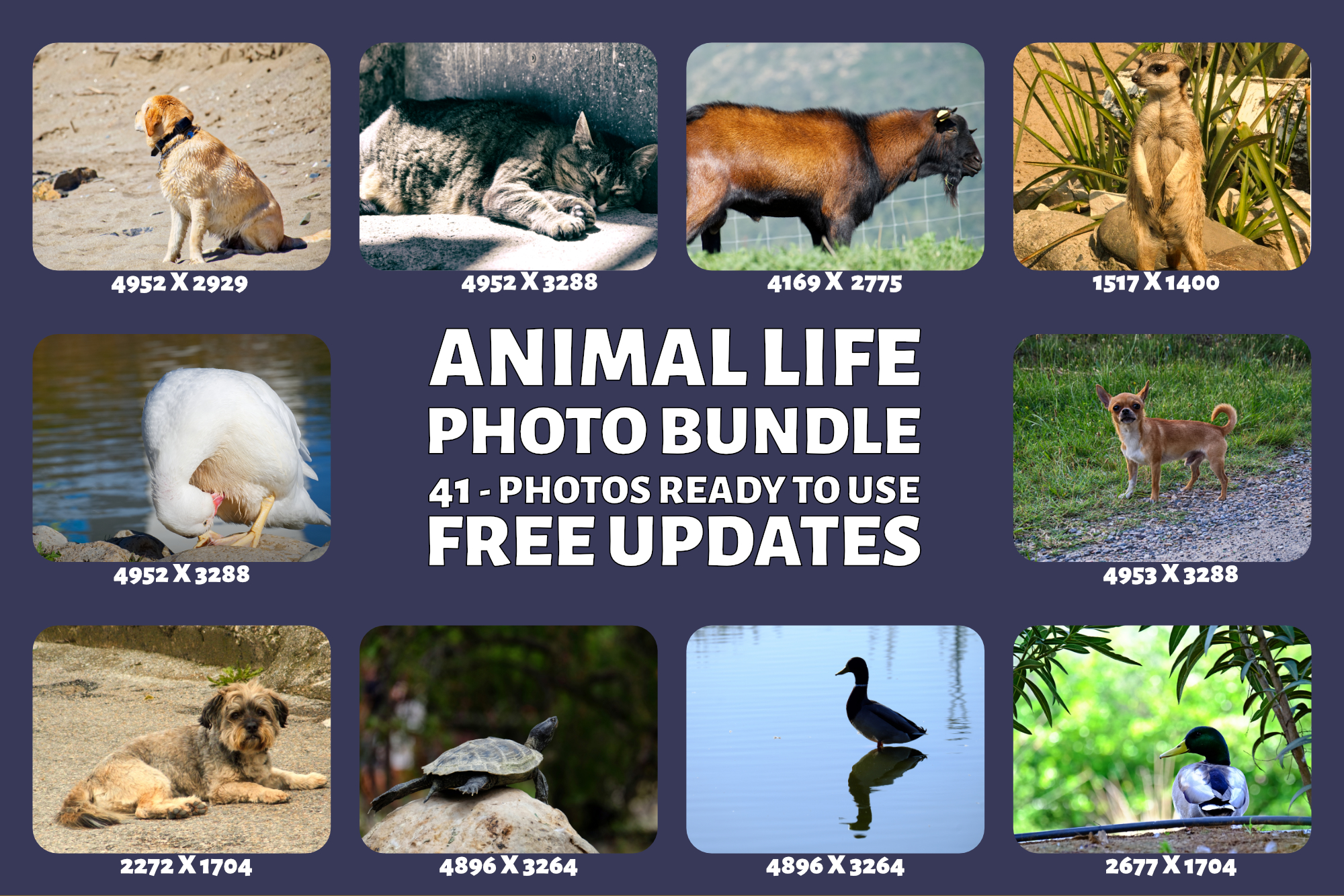 Animal Life Photo Bundle example image 4