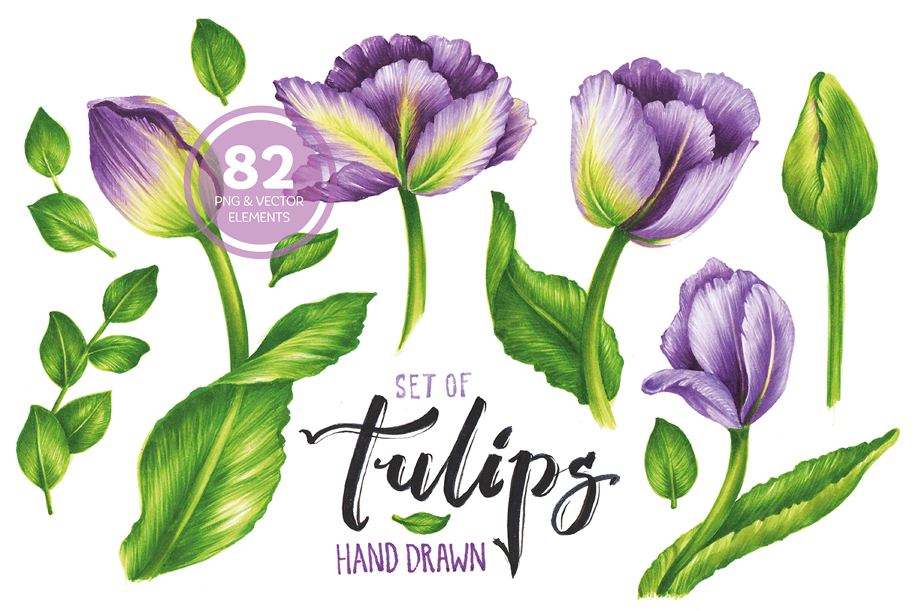 Vector Set Of Violet Tulips example image 1