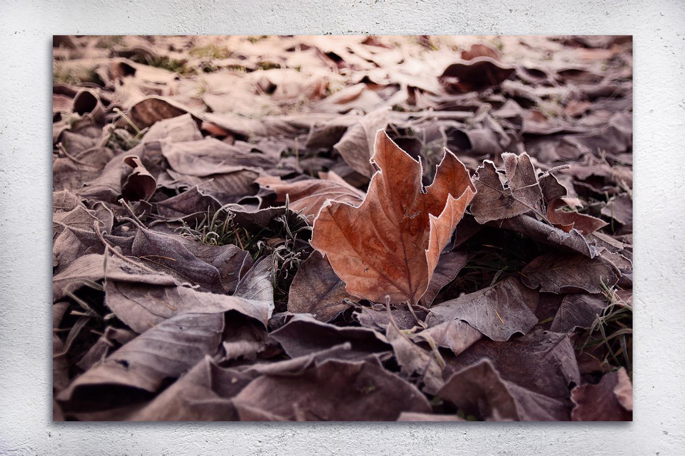 Nature photo, flora photo, leaf photo, winter photo example image 2