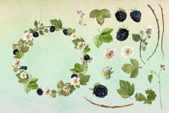 Watercolor Blackberries Clip Art example image 3