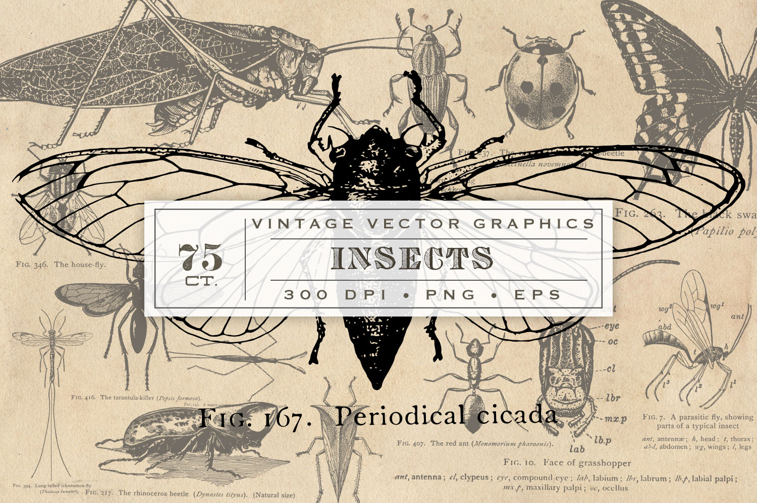 Antique Insect Vector Graphics example image 1