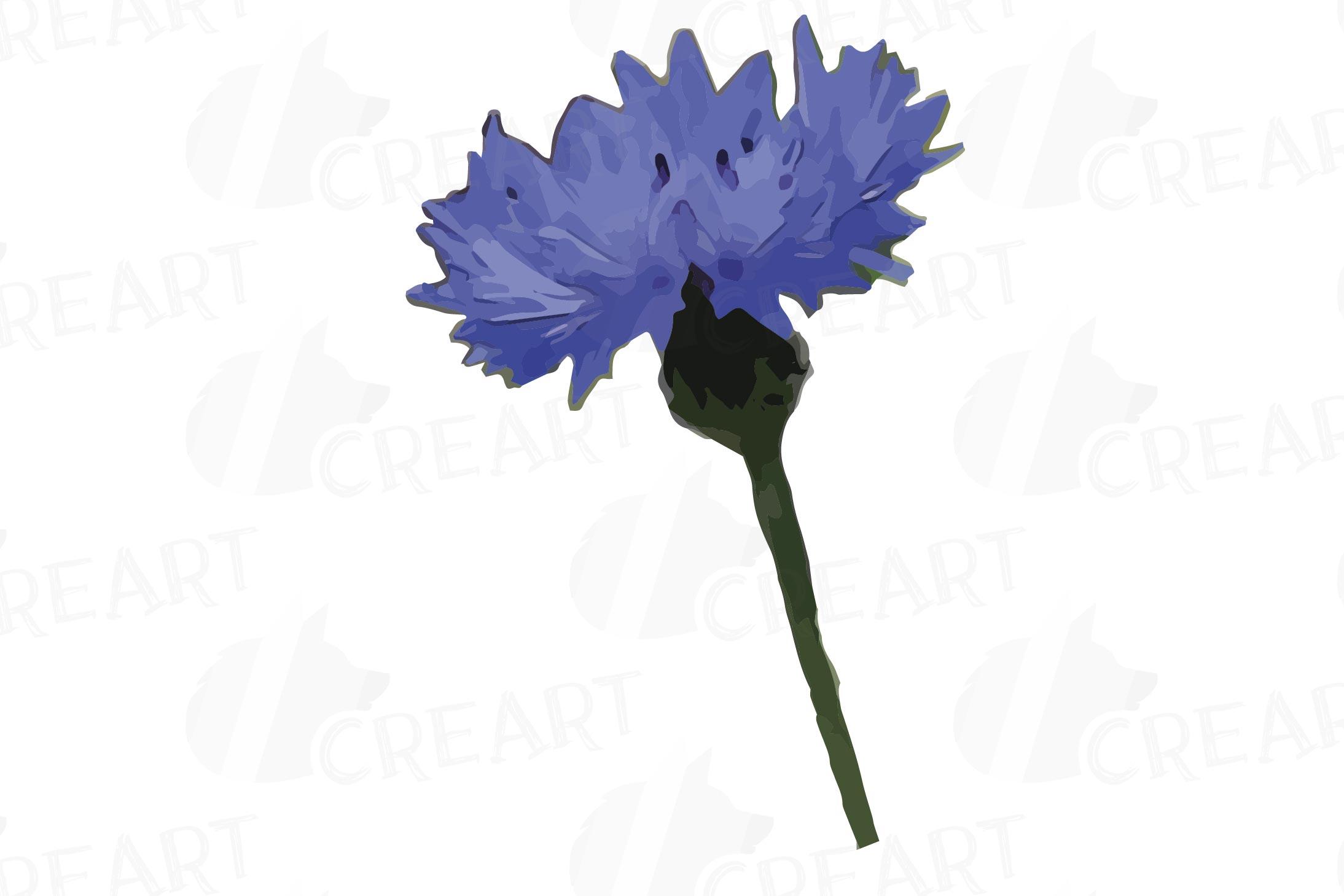 Cornflower watercolor clip art pack, bachelor's button example image 11