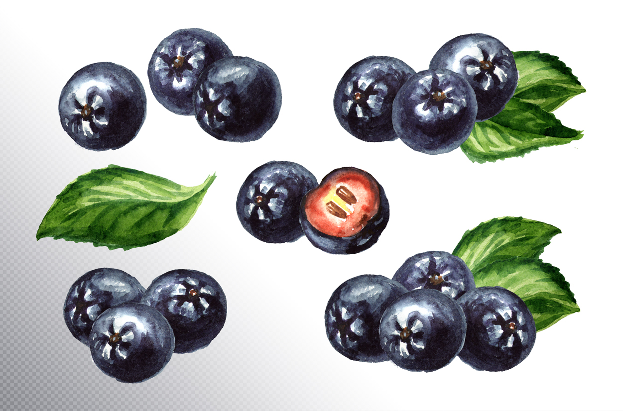 Aronia. Watercolor collection example image 2