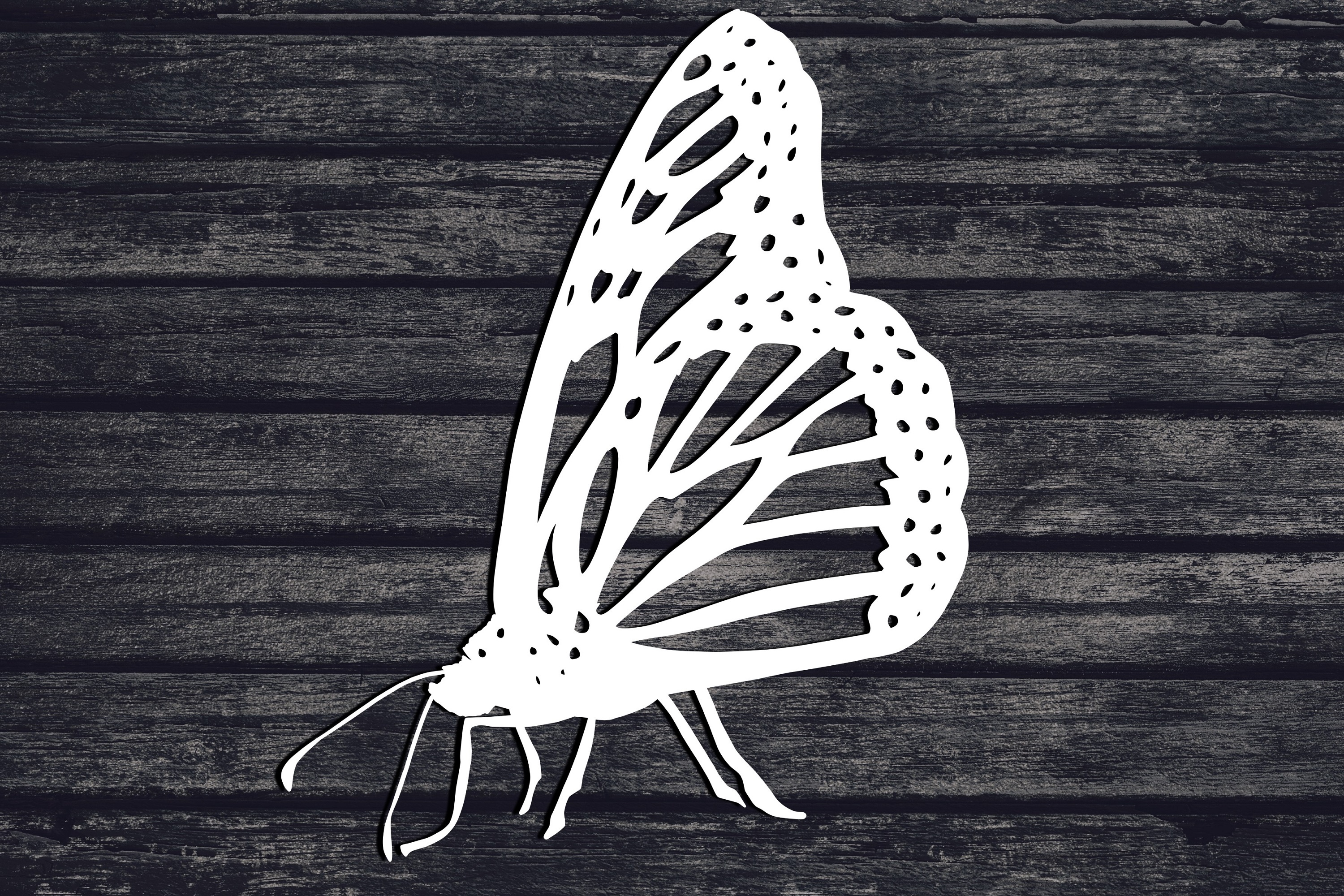 Butterfly Svg, Bug Svg, Insect Svg, Animal Svg, Monarch Svg example image 1