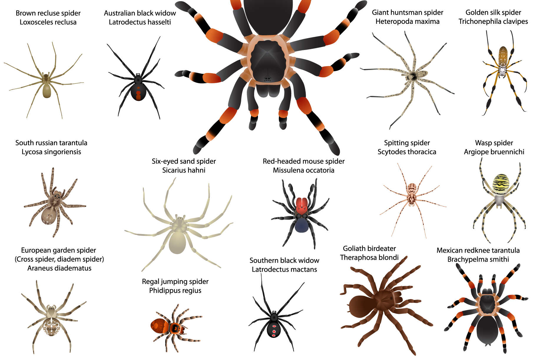 Spiders example image 1